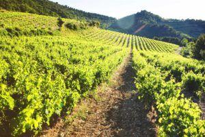 route des vins france