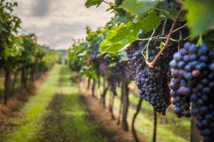 visite de vignobles