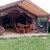 Camping Parc de Loisirs Le Val Fleuri****