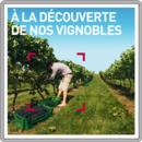À la découverte de nos vignobles