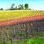 Agriturismo al Rifugio Divino - Azienda Agricola Landi Luciano