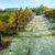 Azienda Agricola Cortino Produttori Dianesi