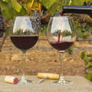 Visita a bodega y cata de vino en Andalucía