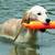 Addestranento Cani