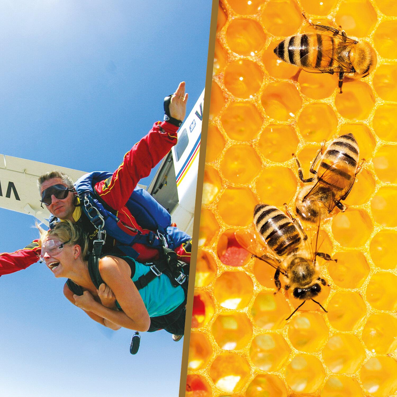 Saut en parachute en tandem et parrainage d'une ruche