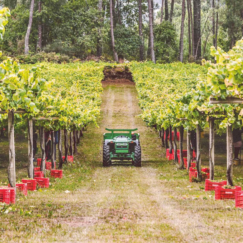 Smartbox |Bodega Paco & Lola: visita y cata de 3 vinos en Pontevedra