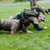 Army Fitness, Flera orter