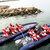Ribbåtstur med sälsafari