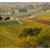 Azienda Agricola Castelvecchio - Terricciola