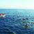 Observation de baleines et dauphins